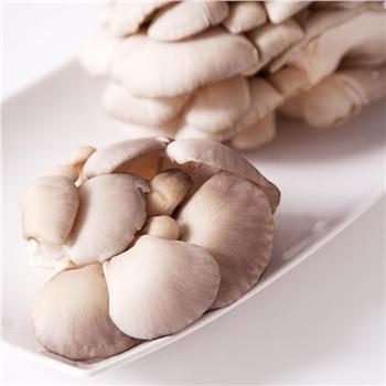 优质鲜平菇 500g